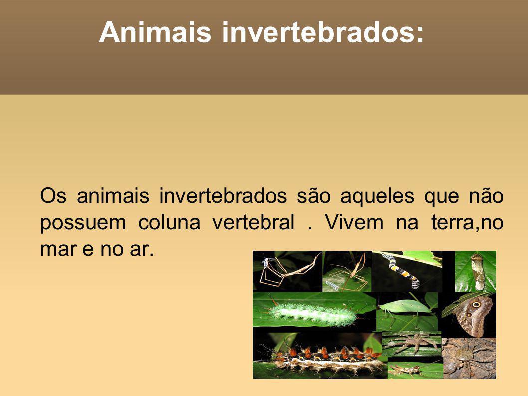 Animais invertebrados: