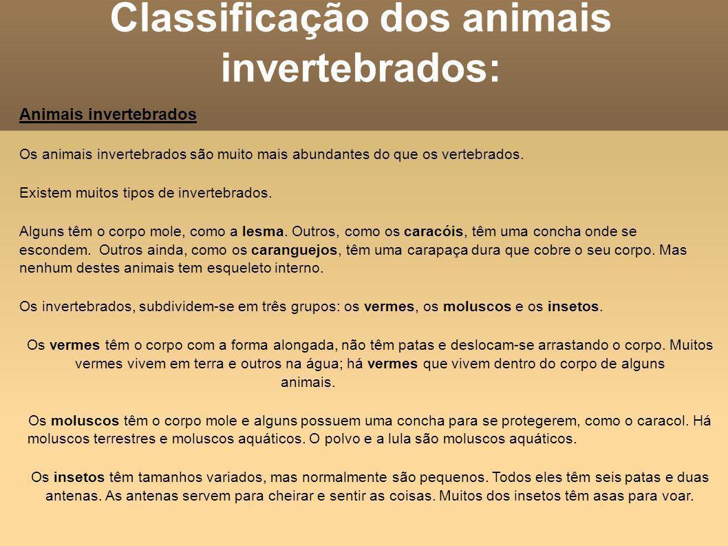 Classificação dos animais invertebrados: