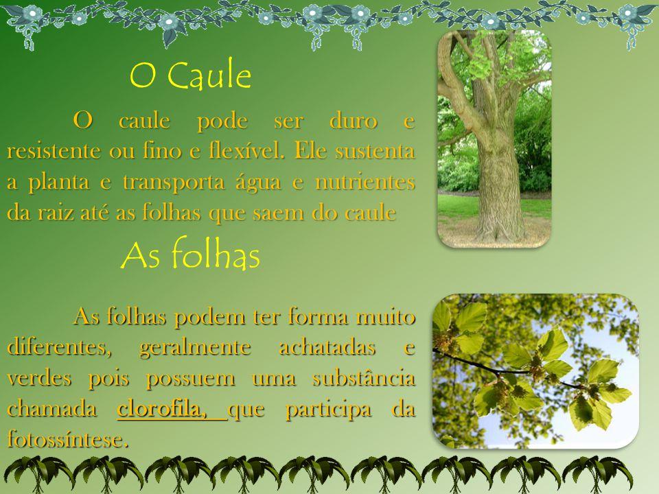 O Caule
