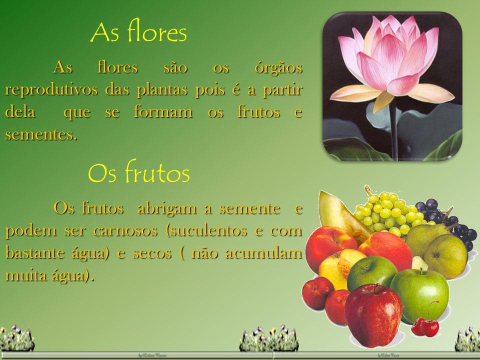 As flores As flores são os órgãos reprodutivos das plantas pois é a partir dela que se formam os frutos e sementes.