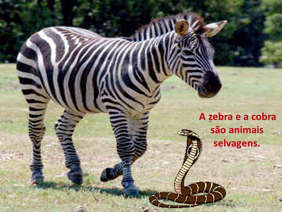 A zebra e a cobra são animais selvagens.
