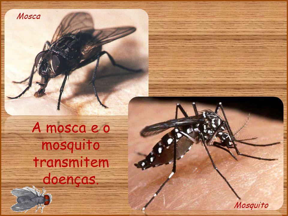 A mosca e o mosquito transmitem doenças.