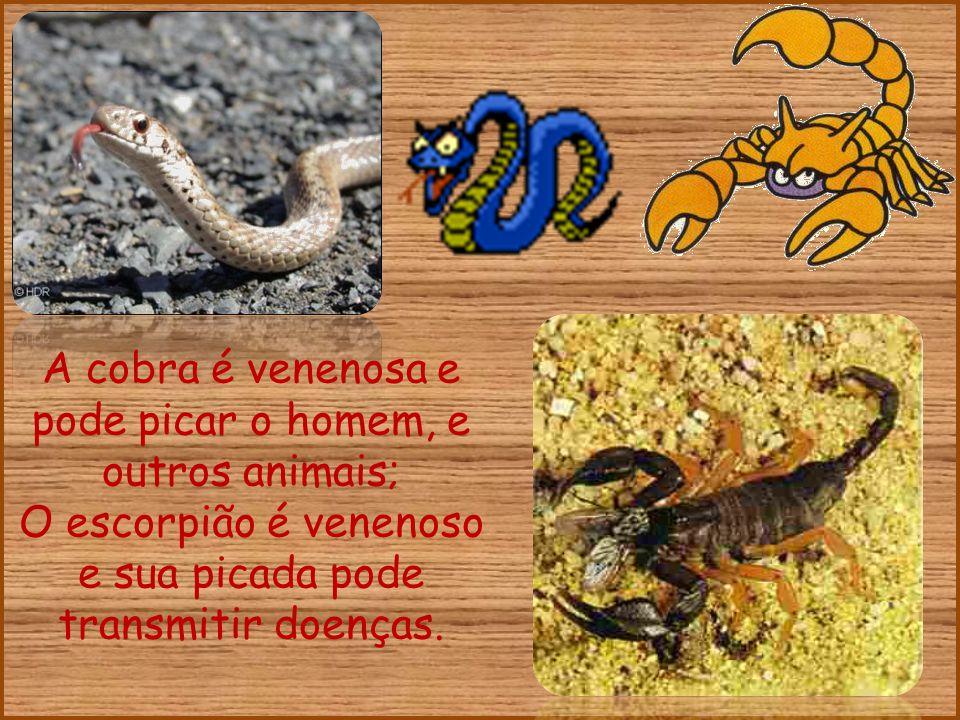 A cobra é venenosa e pode picar o homem, e outros animais;