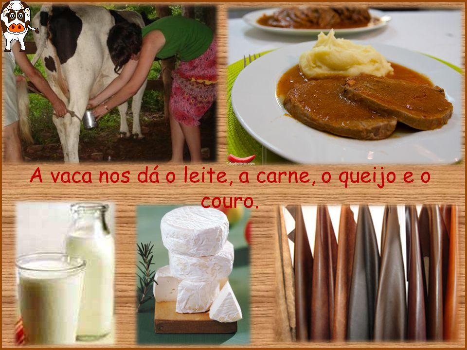 A vaca nos dá o leite, a carne, o queijo e o couro.
