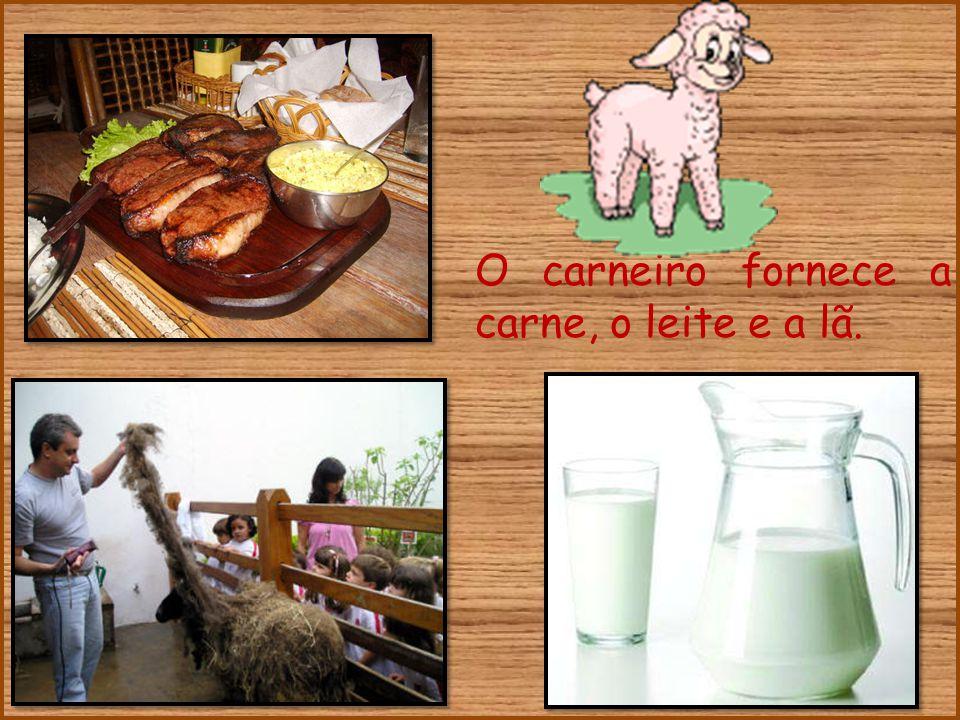O carneiro fornece a carne, o leite e a lã.
