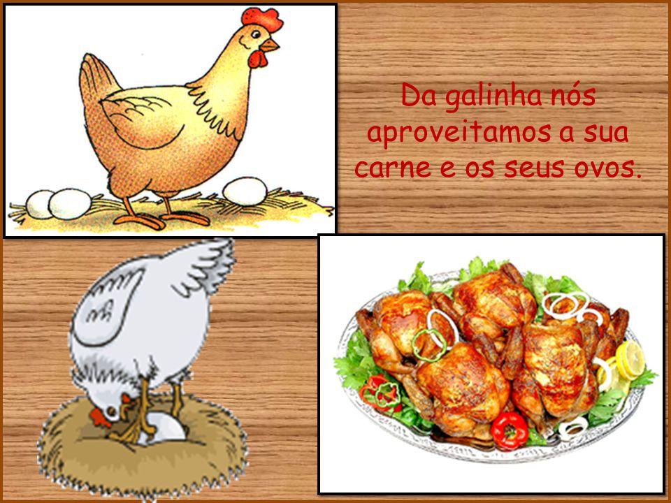 Da galinha nós aproveitamos a sua carne e os seus ovos.