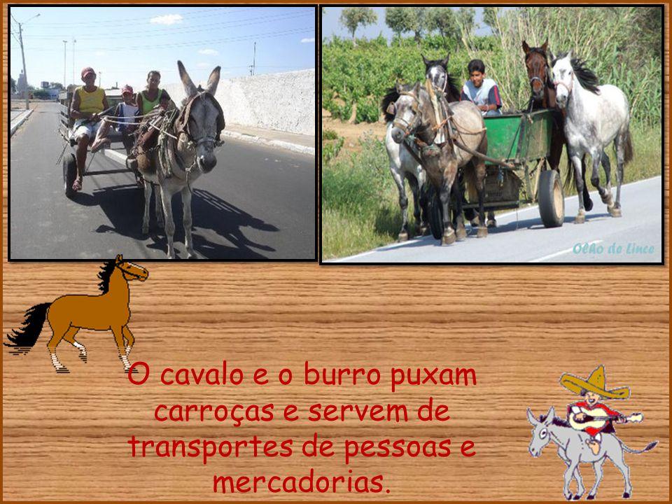 O cavalo e o burro puxam carroças e servem de transportes de pessoas e mercadorias.