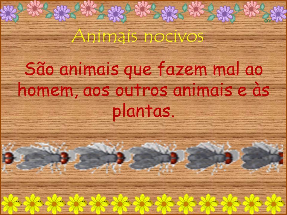 São animais que fazem mal ao homem, aos outros animais e às plantas.