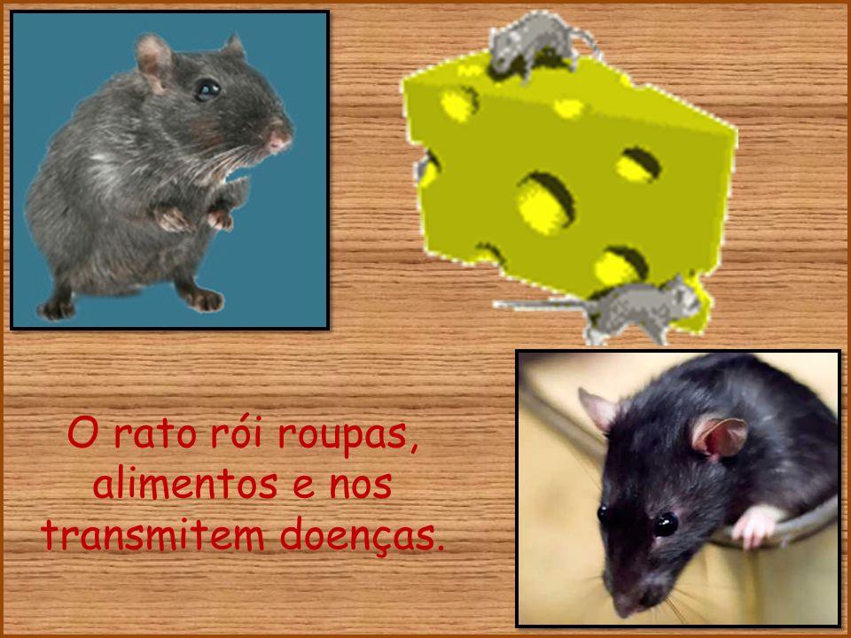 O rato rói roupas, alimentos e nos transmitem doenças.