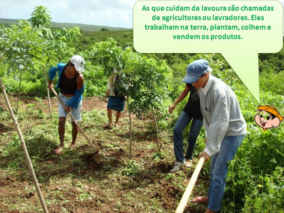 As que cuidam da lavoura são chamadas de agricultores ou lavradores