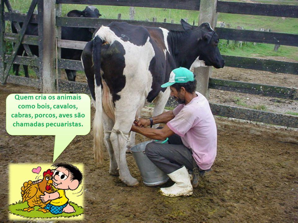 Quem cria os animais como bois, cavalos, cabras, porcos, aves são chamadas pecuaristas.