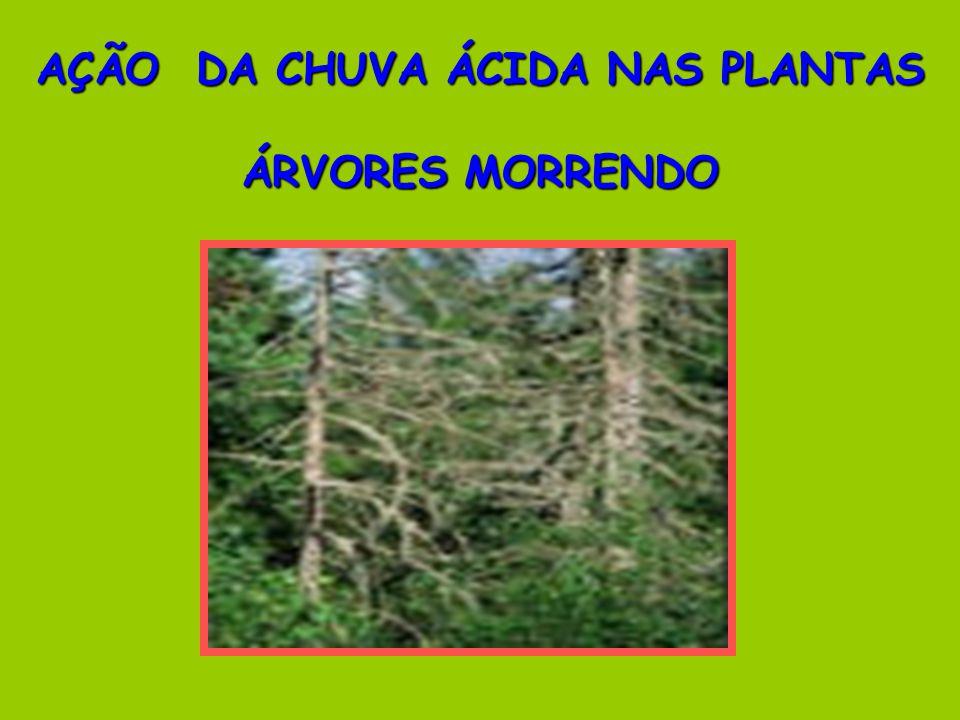 AÇÃO DA CHUVA ÁCIDA NAS PLANTAS ÁRVORES MORRENDO