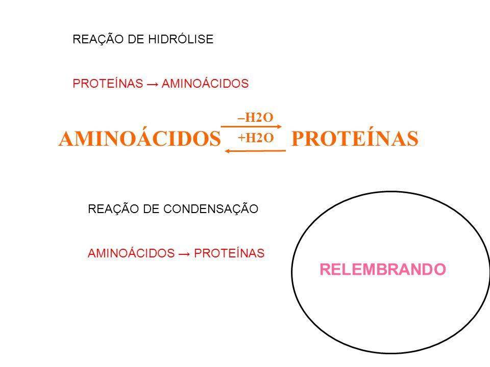 AMINOÁCIDOS PROTEÍNAS RELEMBRANDO –H2O +H2O parana@svn.com.br