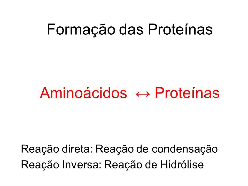 Formação das Proteínas