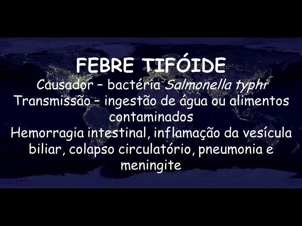 FEBRE TIFÓIDE Causador – bactéria Salmonella typhi