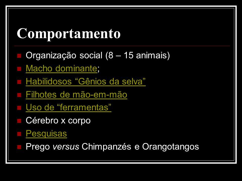 Comportamento Organização social (8 – 15 animais) Macho dominante;