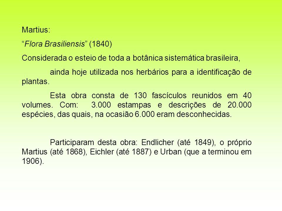 Martius: Flora Brasiliensis (1840) Considerada o esteio de toda a botânica sistemática brasileira,