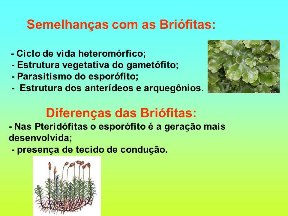 Semelhanças com as Briófitas: Diferenças das Briófitas: