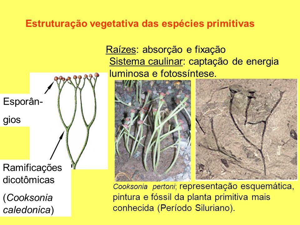 Estruturação vegetativa das espécies primitivas