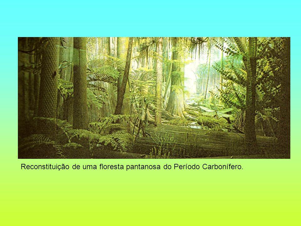 Reconstituição de uma floresta pantanosa do Período Carbonífero.