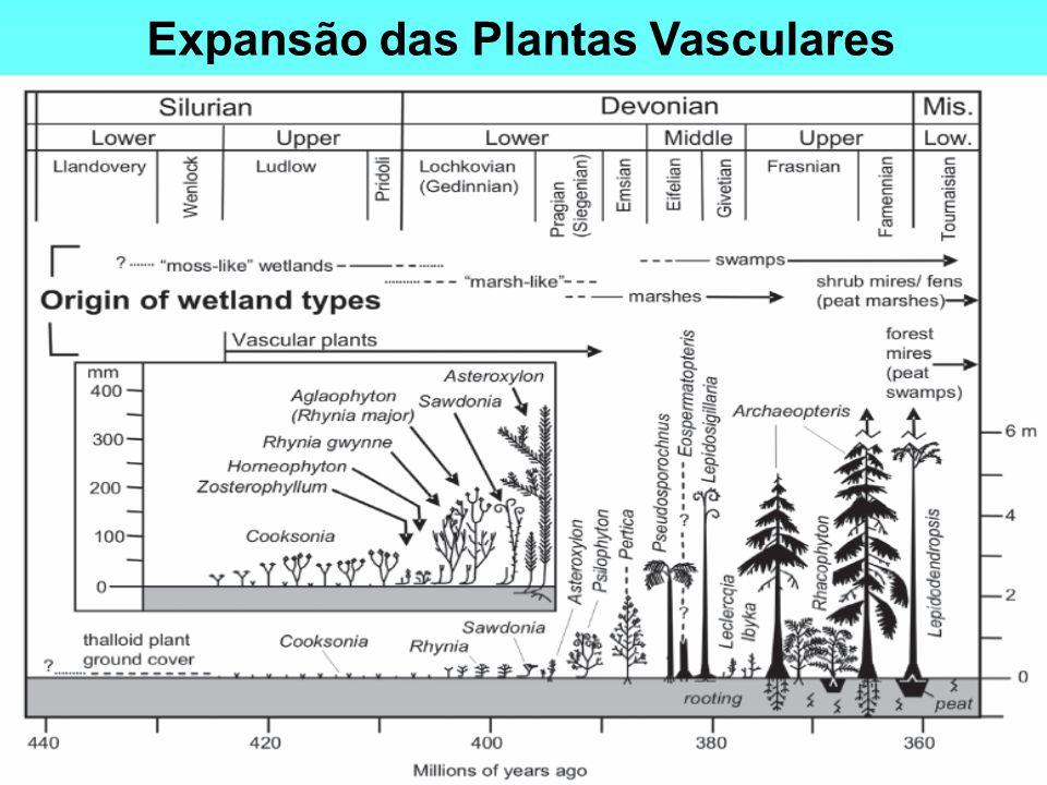 Expansão das Plantas Vasculares