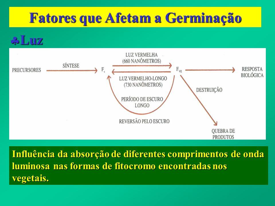 Fatores que Afetam a Germinação