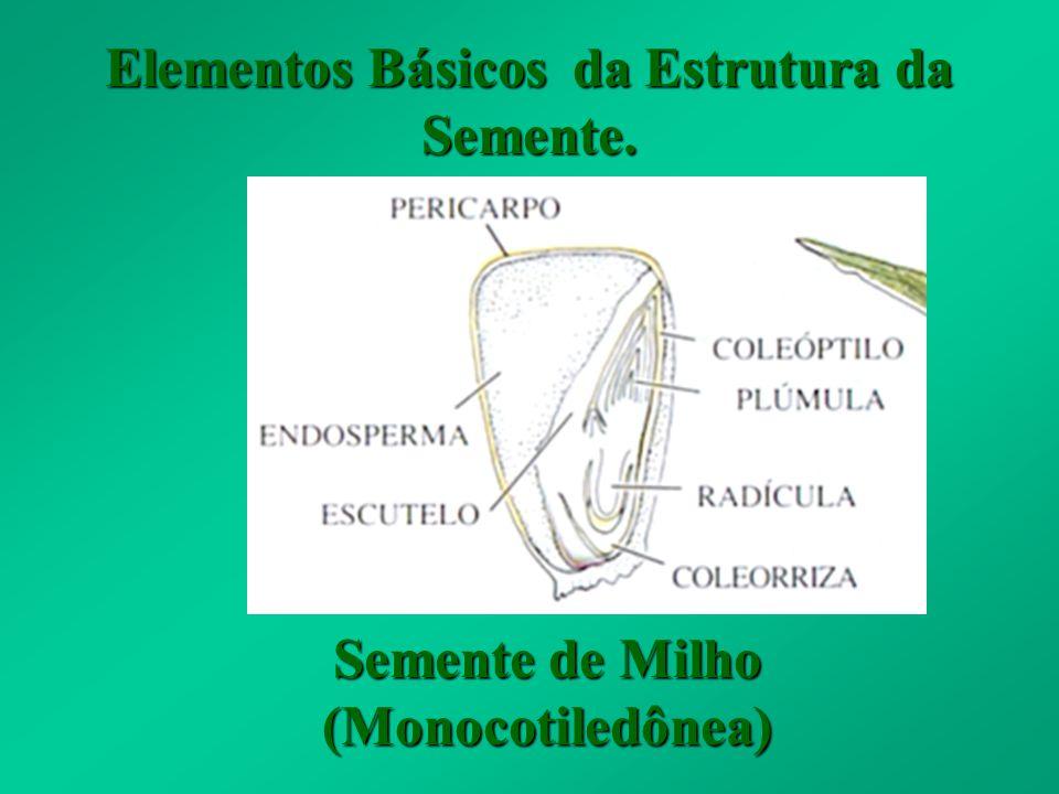 Elementos Básicos da Estrutura da Semente.