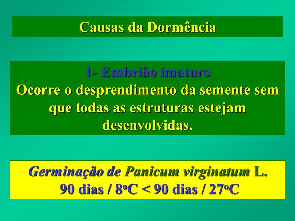 Germinação de Panicum virginatum L.