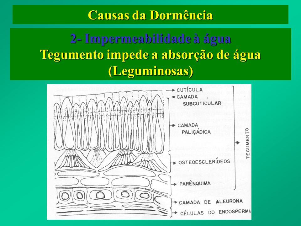 2- Impermeabilidade à água Tegumento impede a absorção de água