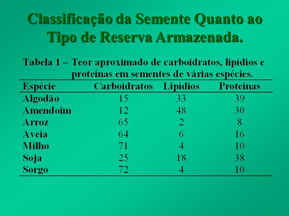 Classificação da Semente Quanto ao Tipo de Reserva Armazenada.