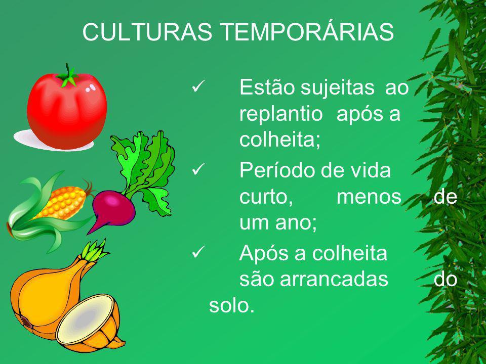 CULTURAS TEMPORÁRIAS Estão sujeitas ao replantio após a colheita;