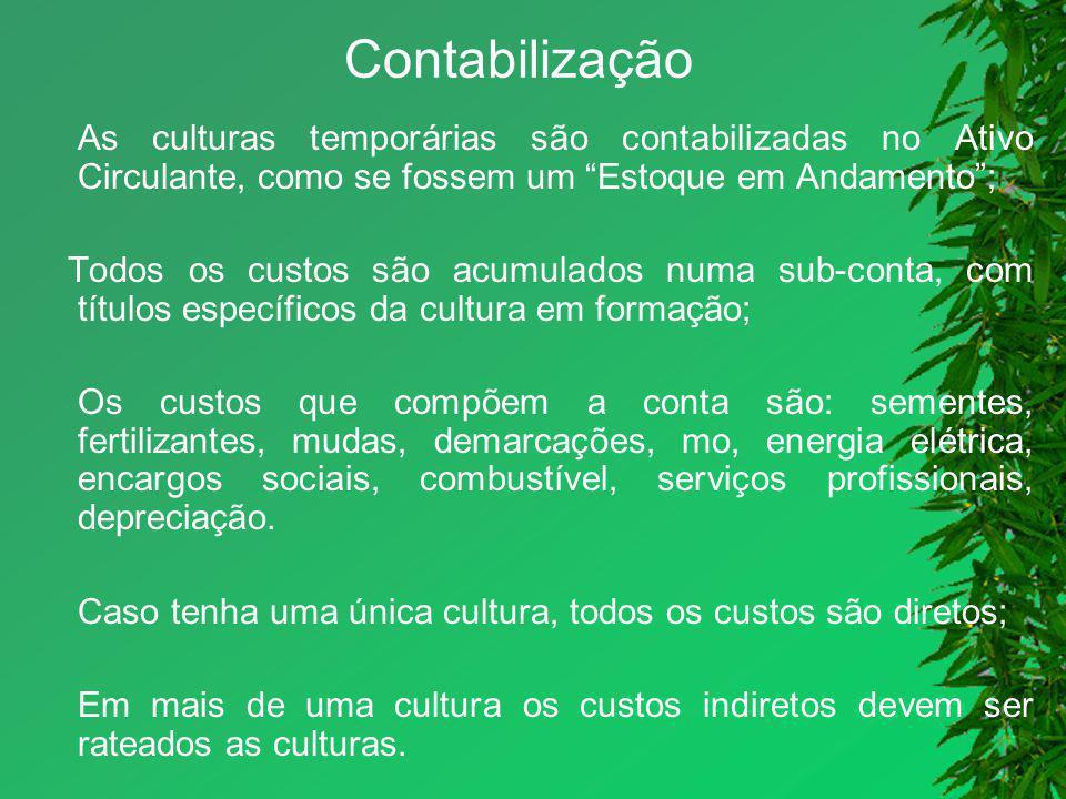 Contabilização As culturas temporárias são contabilizadas no Ativo Circulante, como se fossem um Estoque em Andamento ;