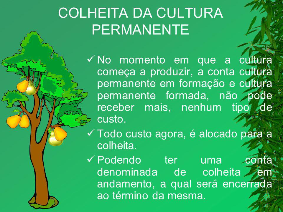 COLHEITA DA CULTURA PERMANENTE