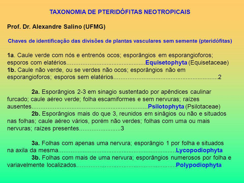 TAXONOMIA DE PTERIDÓFITAS NEOTROPICAIS