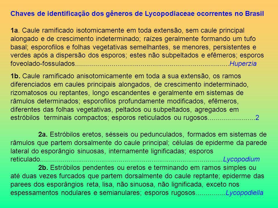 Chaves de identificação dos gêneros de Lycopodiaceae ocorrentes no Brasil