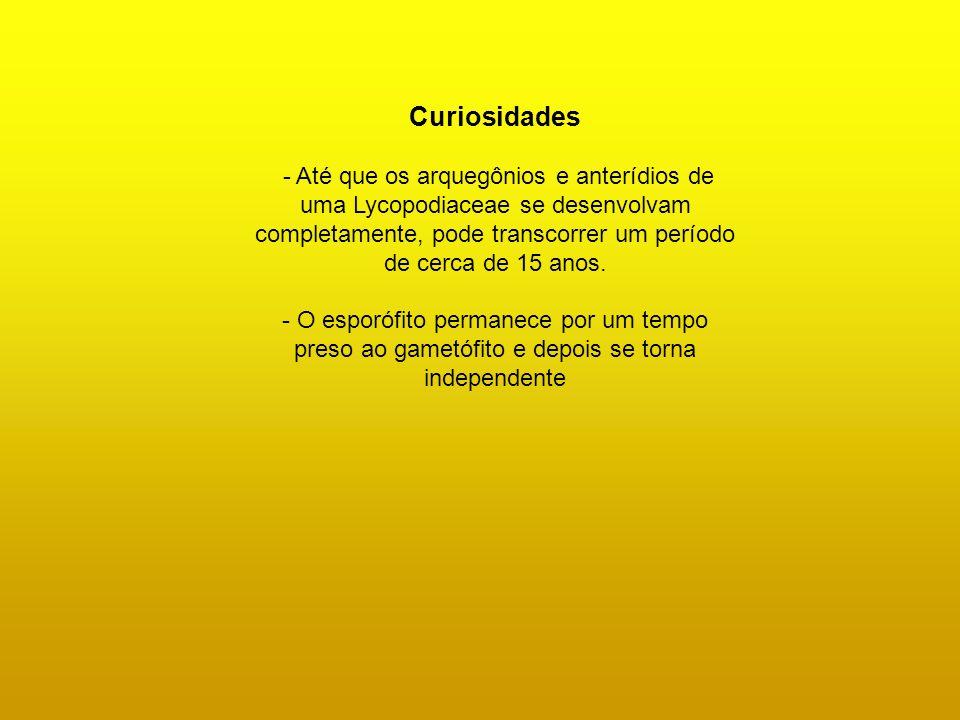 Curiosidades - Até que os arquegônios e anterídios de