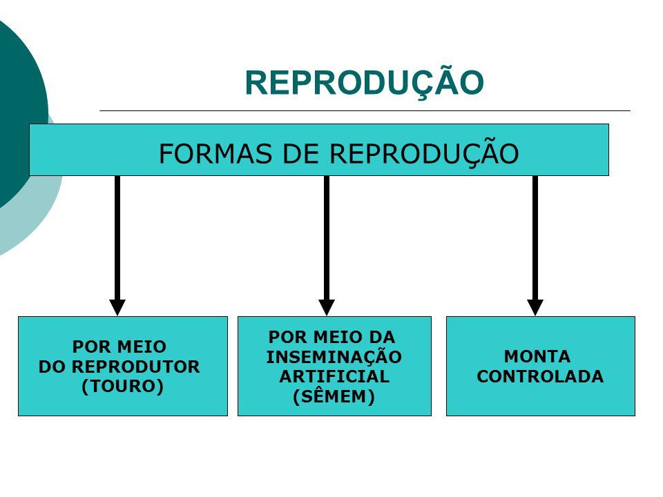 REPRODUÇÃO FORMAS DE REPRODUÇÃO POR MEIO DO REPRODUTOR (TOURO)