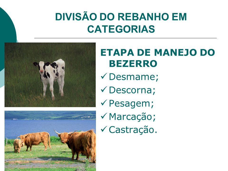 DIVISÃO DO REBANHO EM CATEGORIAS