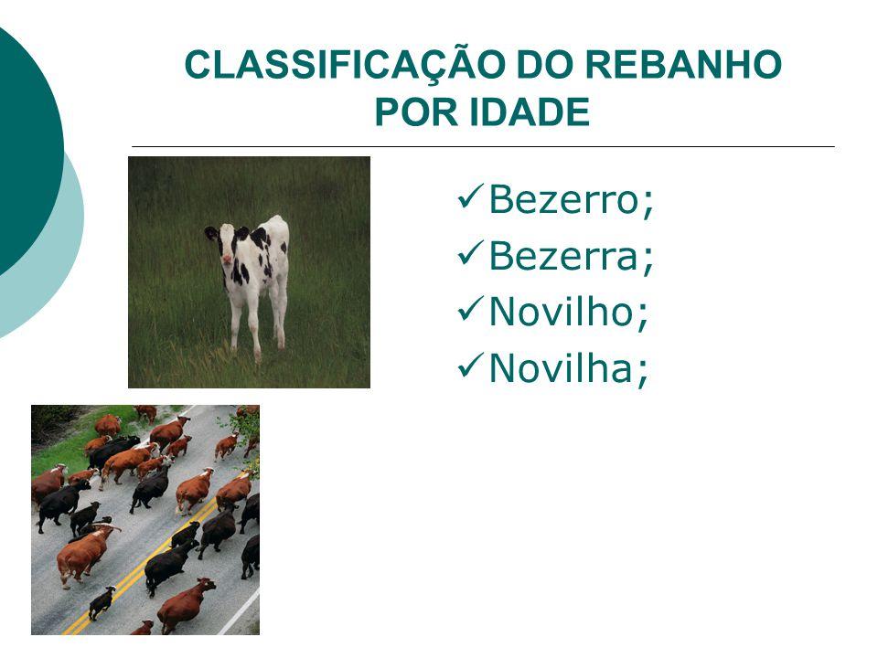 CLASSIFICAÇÃO DO REBANHO POR IDADE