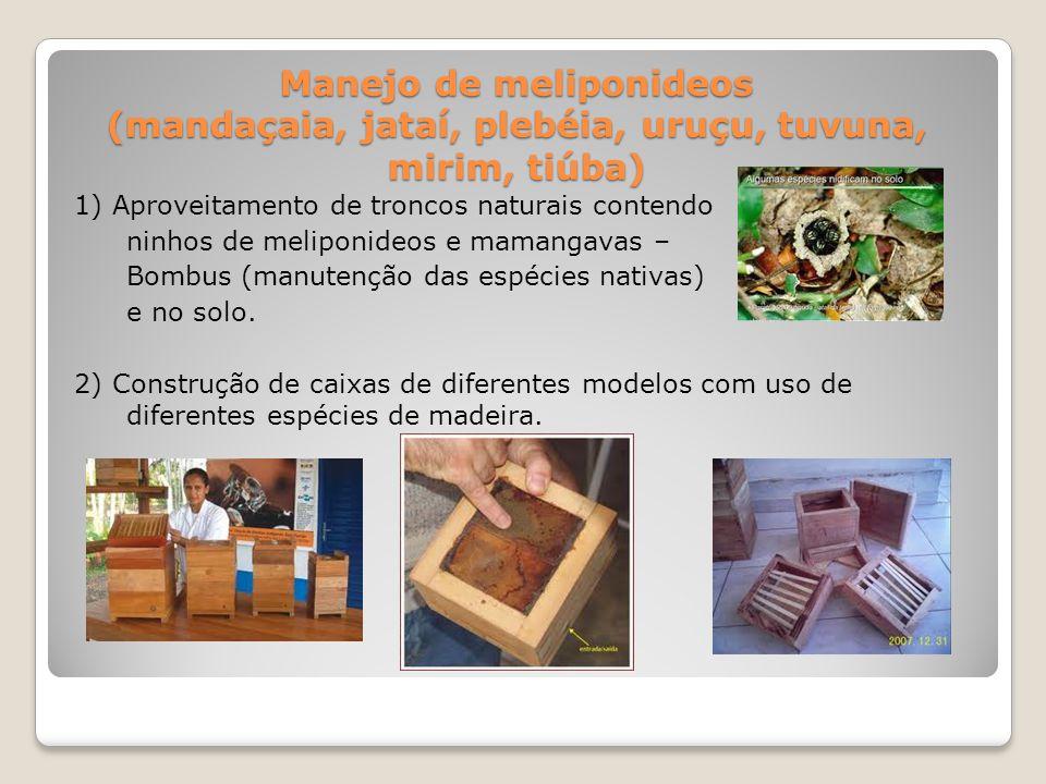 Manejo de meliponideos (mandaçaia, jataí, plebéia, uruçu, tuvuna, mirim, tiúba)