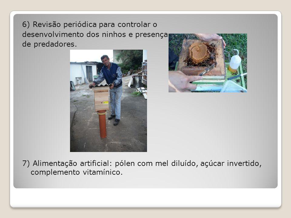6) Revisão periódica para controlar o desenvolvimento dos ninhos e presença de predadores.