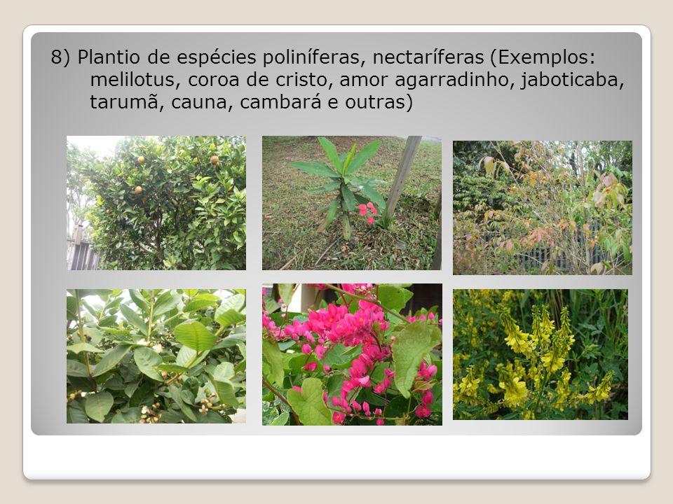 8) Plantio de espécies poliníferas, nectaríferas (Exemplos: melilotus, coroa de cristo, amor agarradinho, jaboticaba, tarumã, cauna, cambará e outras)