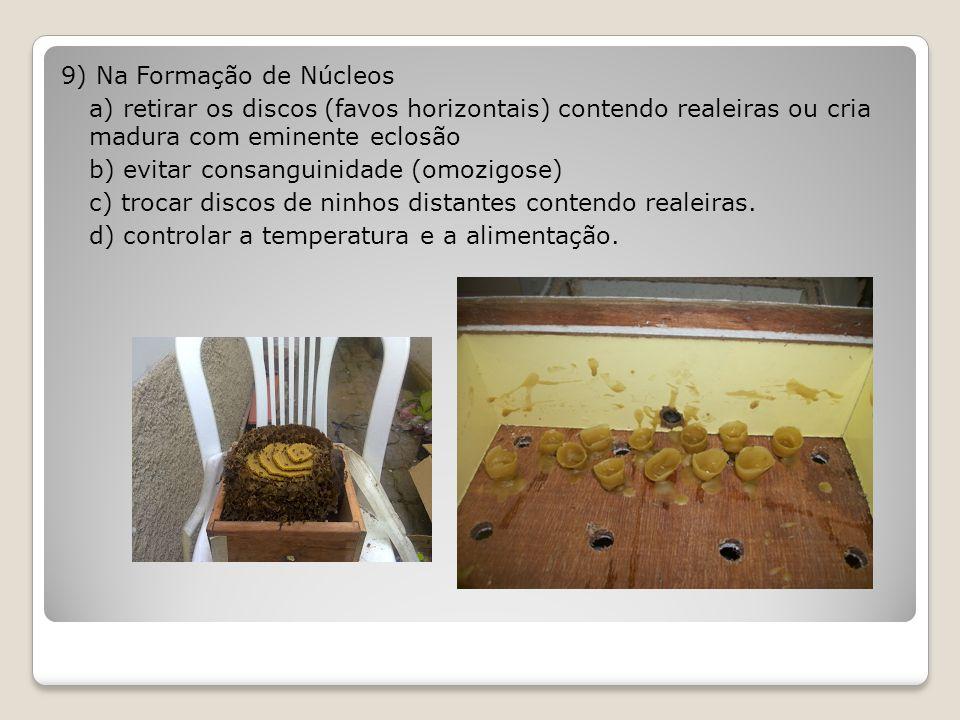 9) Na Formação de Núcleos a) retirar os discos (favos horizontais) contendo realeiras ou cria madura com eminente eclosão b) evitar consanguinidade (omozigose) c) trocar discos de ninhos distantes contendo realeiras.