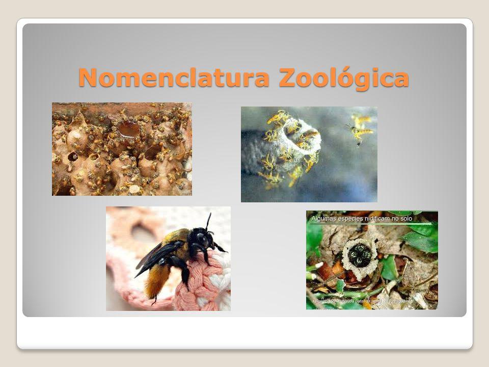 Nomenclatura Zoológica