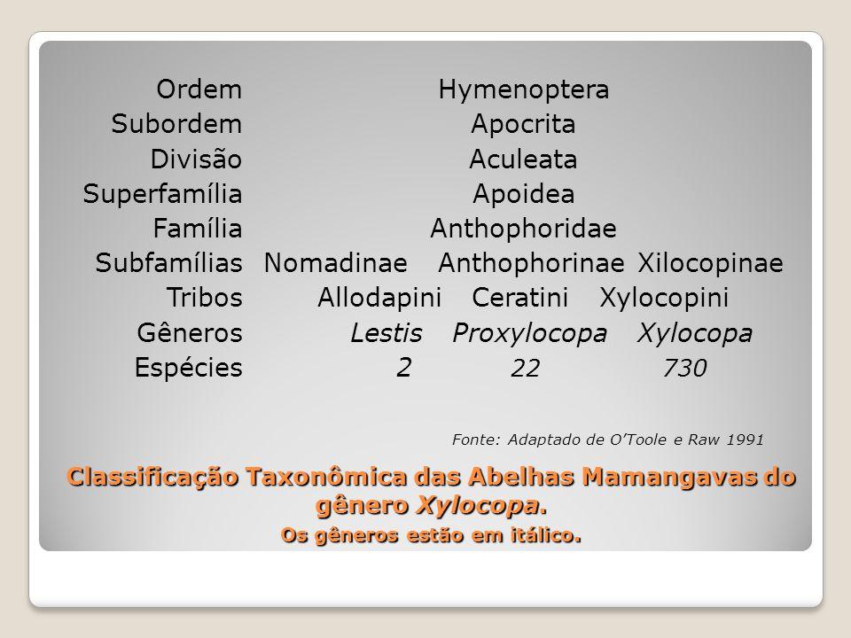Nomadinae Anthophorinae Xilocopinae Allodapini Ceratini Xylocopini