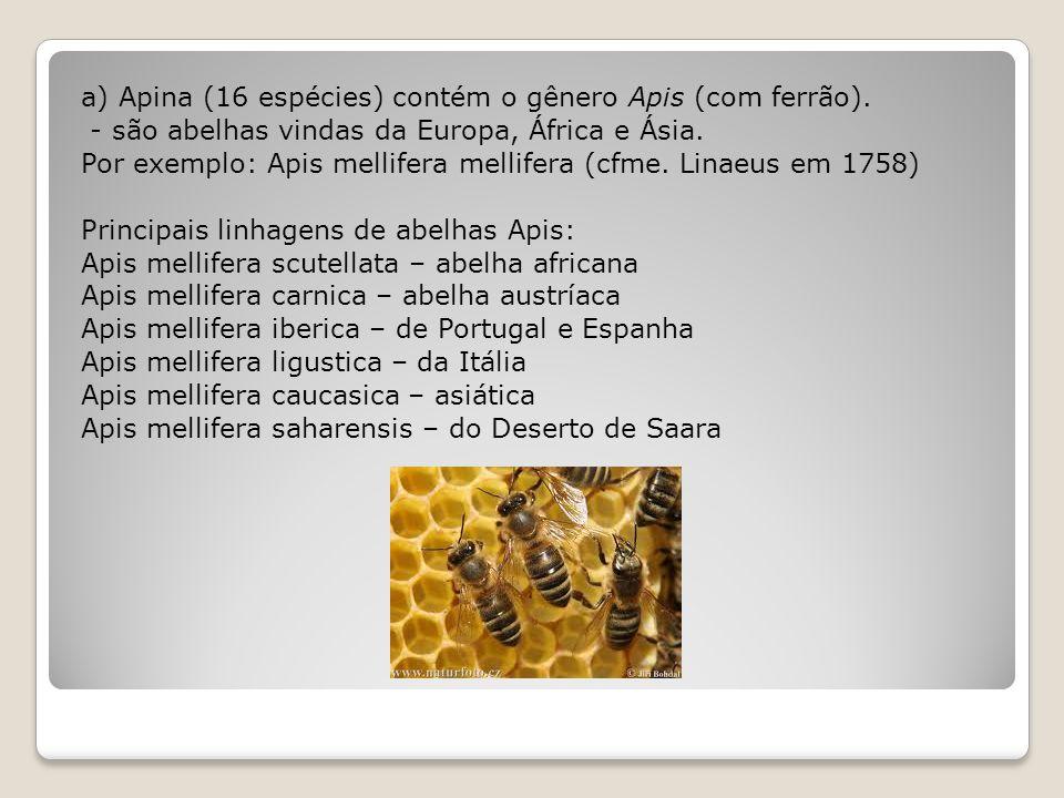 a) Apina (16 espécies) contém o gênero Apis (com ferrão)