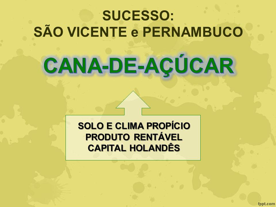 SÃO VICENTE e PERNAMBUCO