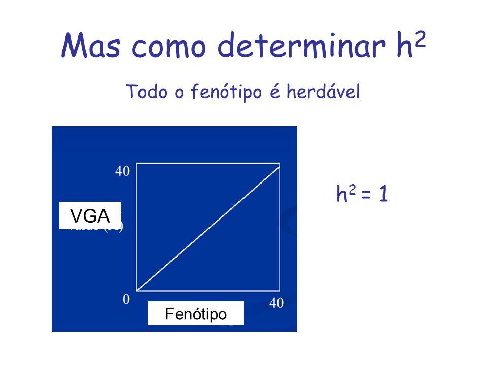 Mas como determinar h2 Todo o fenótipo é herdável h2 = 1 VGA Fenótipo