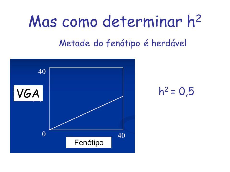 Mas como determinar h2 VGA h2 = 0,5 Metade do fenótipo é herdável