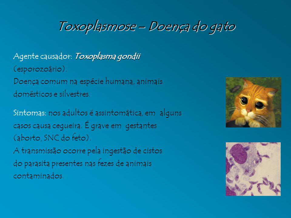 Toxoplasmose – Doença do gato